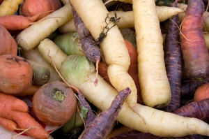 Carrot varieties horizontal